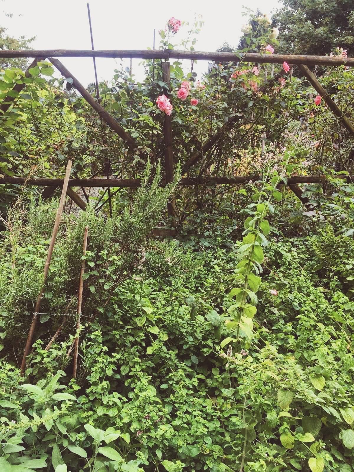 cottage chic anglais jardin roseraie